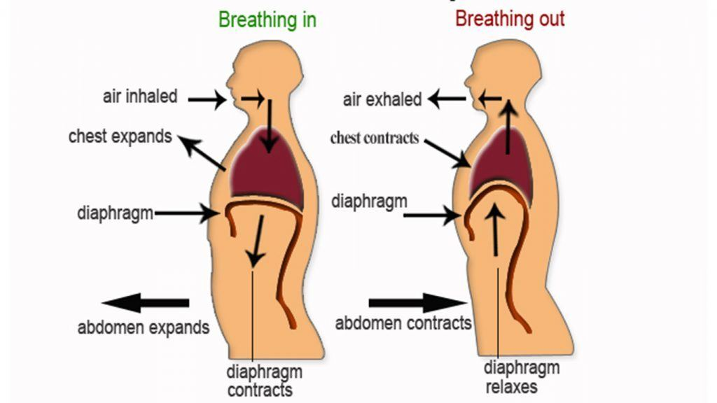 Breathing from the Diaphragm